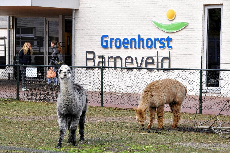 Groenhorst krijgt hbo-opleiding